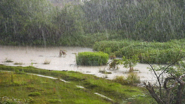 Commodities@Moneycontrol: Why Skymet forecast of a normal monsoon may not enthuse farmers