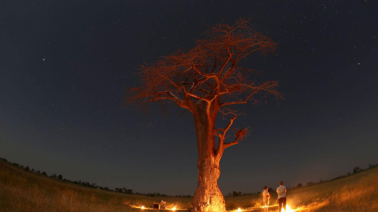 Guests stand beneath a Baobab tree illuminated by fire in the Okavango Delta, Botswana. (Reuters)