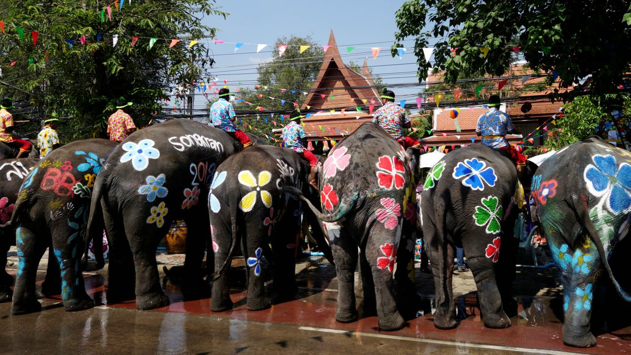 Painted elephants are seen during the celebration of Songkran Water Festival, to commemorate Thailand's New Year in Ayutthaya, Thailand. (Image: Reuters)