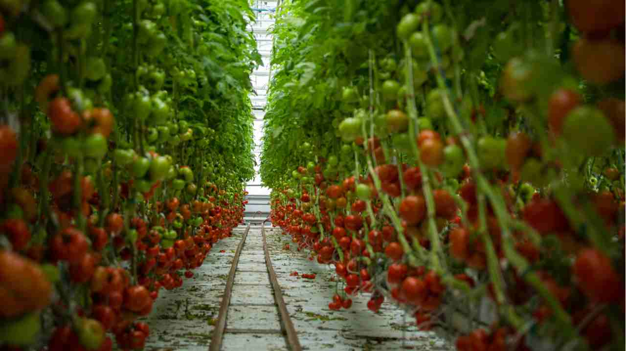 Vertical Farming | With gradually reducing farming space and ever increasing demand for food, vertical faming is employed , especially in urban centres, to provide fresh produce. The technology if employed on a large scale can really solve the food problem for urban population. (Wikimedia Commons)