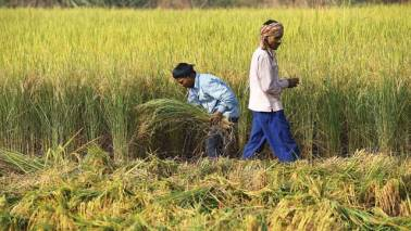 Podcast | Is the steep hike in MSP for kharif crops a giant leap for the Indian farmer?