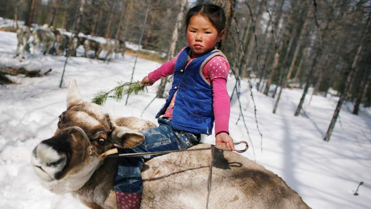 Tsetse, the 6-year-old daughter of Dukha herder Erdenebat Chuluu, rides a reindeer in the forest near the village of Tsagaannuur, Khovsgol aimag, Mongolia. (Reuters)