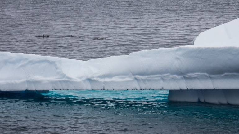 World\'s largest iceberg set to disappear after 18-year-long journey ...