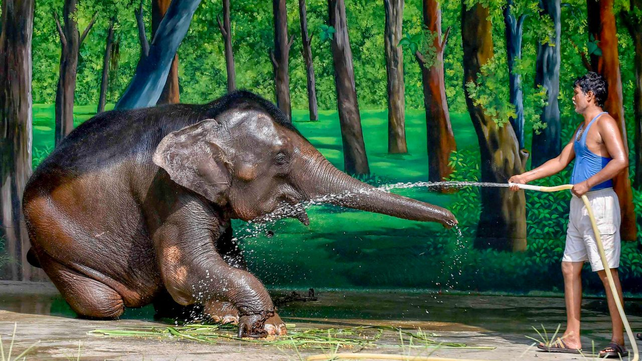 A mahout showers an elephant on a hot, summer day at Alipore Zoological Gardens in Kolkata. (Image: PTI)