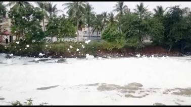 Environmental emergency in Bellandur lake, not even 1 ml of clean water available, NGT informed