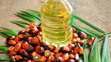 In talks with India, other countries on palm oil sales: Malaysia