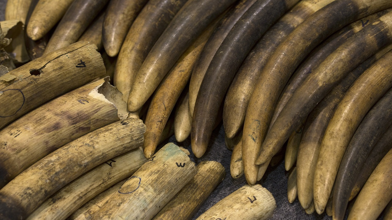 Answer: Ivory (Image: Reuters)