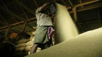 Asia Rice: India rates dip as demand slows, Bangladesh to review export ban
