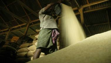 India earns Rs 18,000 crore per year from export of basmati rice