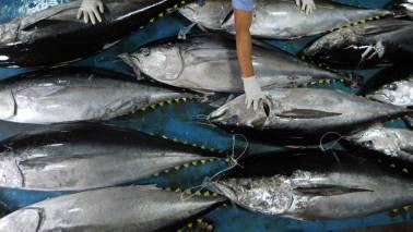 Goa traders say import of fish resuming December 6, govt stays mum