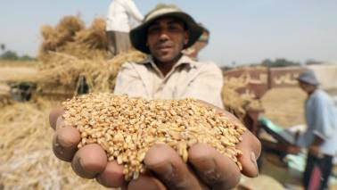 Government eyes record 285.2 MT foodgrain output in 2018-19