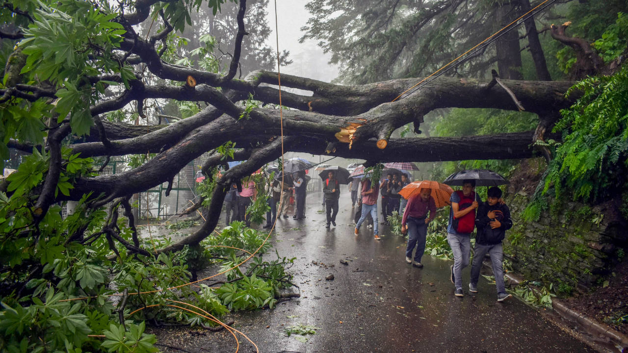 An uprooted tree falls in a road following monsoon rainfall, in Shimla. (Image: PTI)