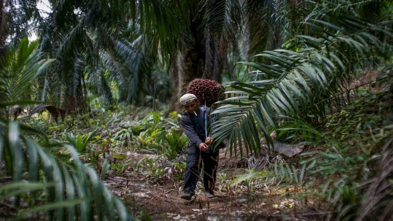 Palm oil imports drop 9 17% in April