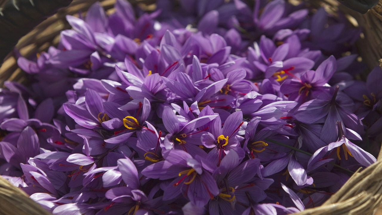 Q4. Which widely used product derives its name from the Gardenia herb and the crocus flower? (Image:Reuters)