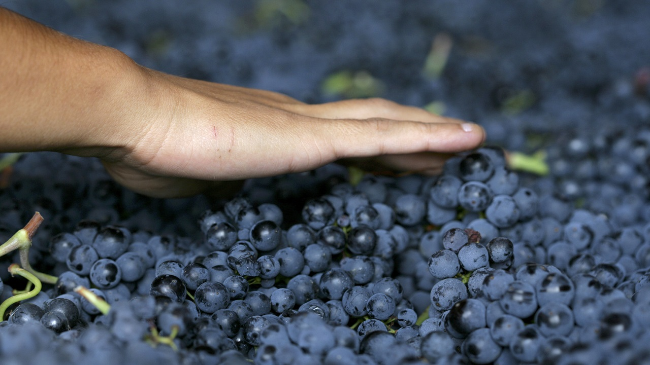 Answer: All are types of Grapes (Image:Reuters)