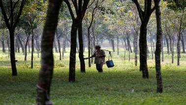 India's 2018/19 natural rubber imports surge to record high: Rubber Board