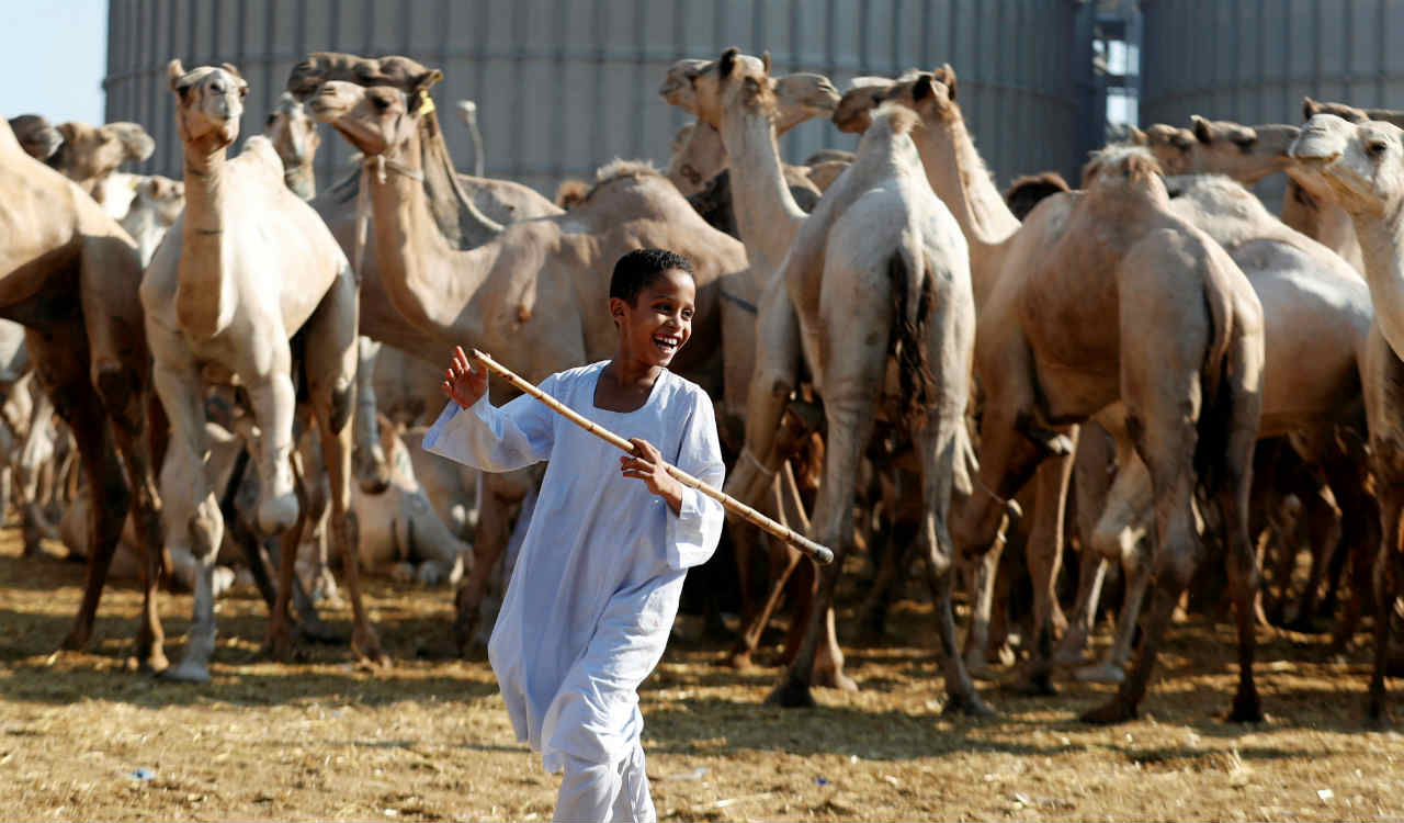 A camel trader's son smiles as camels are shown to prospective buyers at the Birqash Camel Market, ahead of Eid al-Adha or Festival of Sacrifice, on the outskirts of Cairo, Egypt. (Reuters)