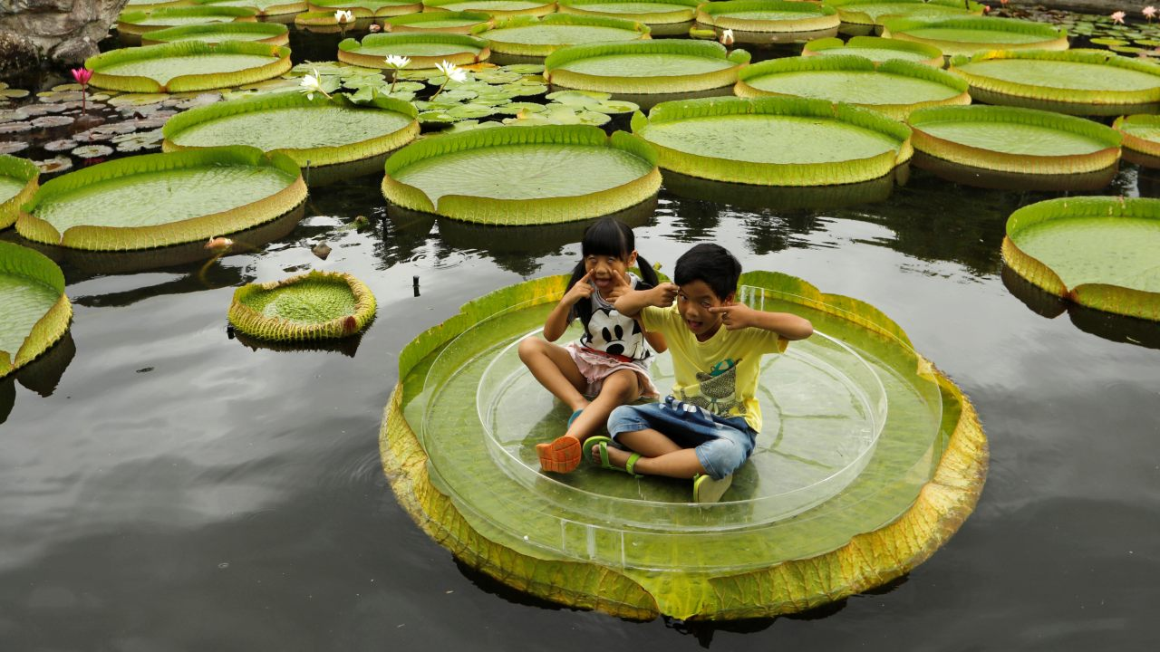 Children pose for a photo on a giant waterlily leaf during an annual leaf-sitting event in Taipei, Taiwan. (Reuters)