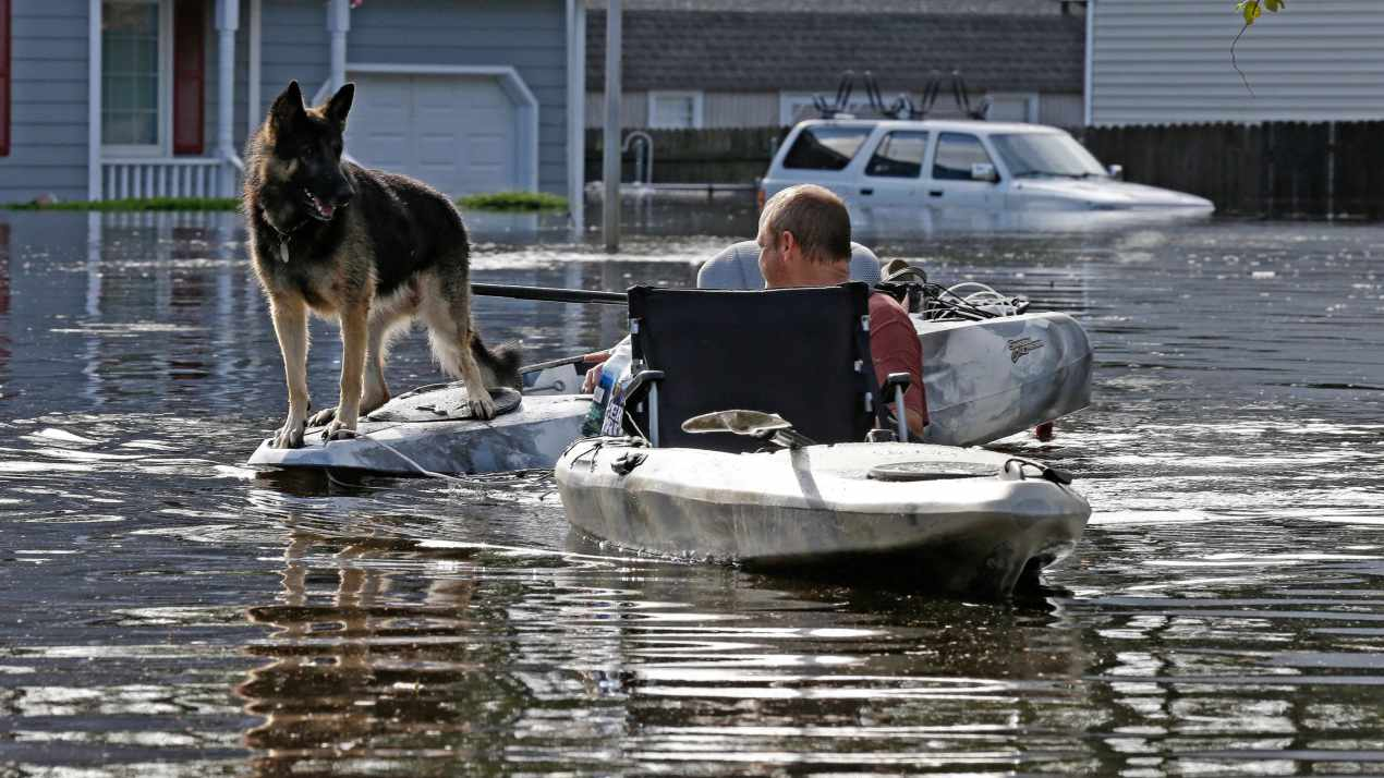 A man tries to get his dog out of a flooded neighborhood in Lumberton, N.C. in the aftermath of Hurricane Florence. (AP/PTI)