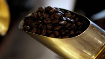 India cuts coffee output estimate by 16% as heavy rains trim yield