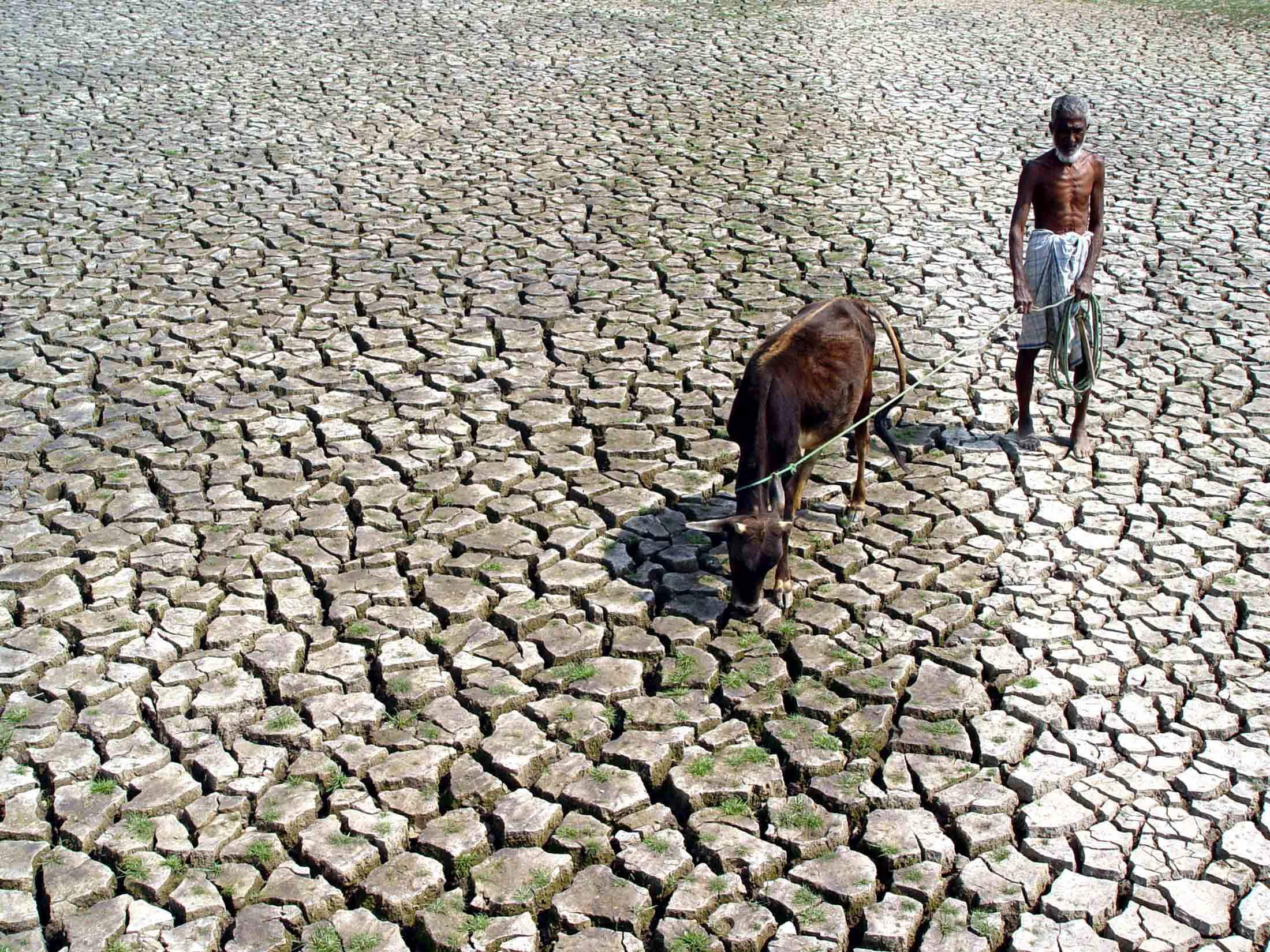 Climate change poses a risk to food security in India. (Image: Reuters)