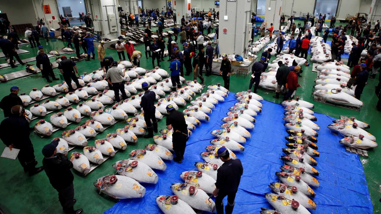 The legendary Tsukiji market attracted tens of thousands of visitors in a year to its maze of stalls stocked with various species of exotic aquatic life. It was a key contributor to Japan's tourism industry and an integral part of Prime Minister Shinzo Abe's economic plan. (Image: Reuters)