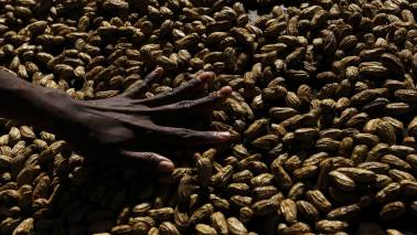 India's groundnut output seen down 29% on scanty rains: Trade body