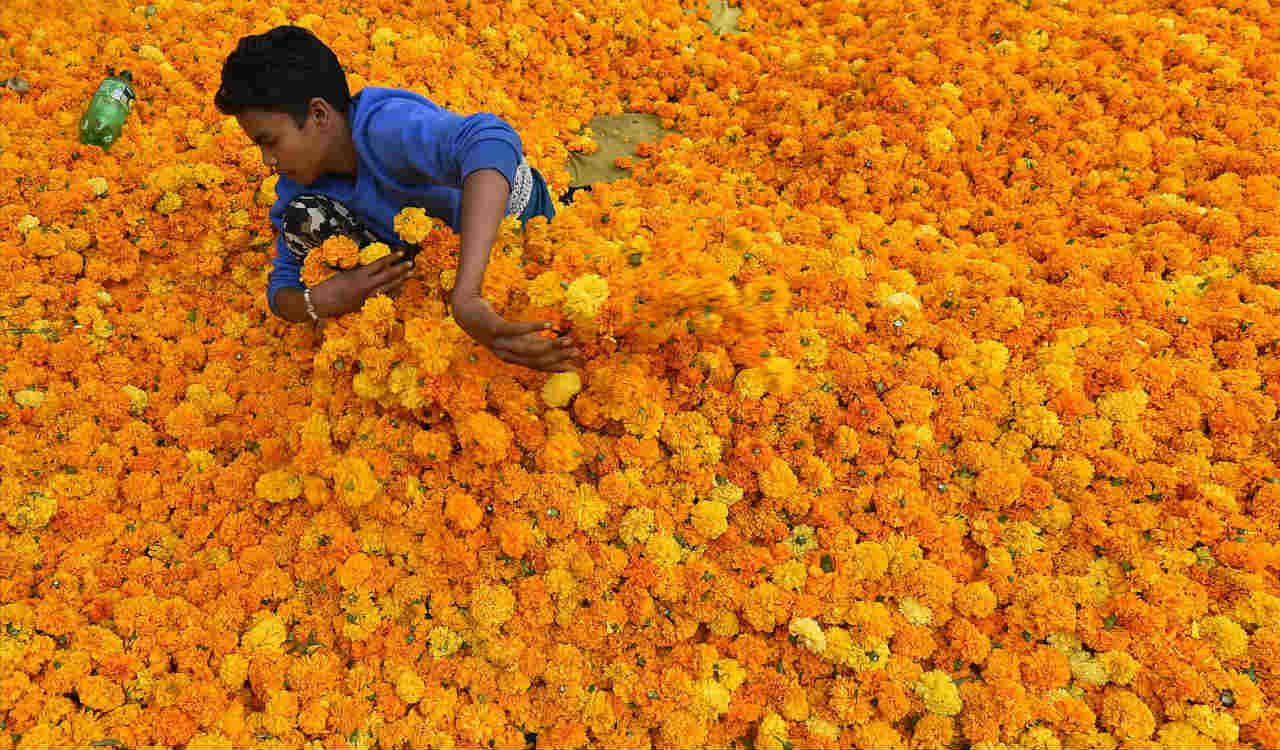 A worker sits among Marigold flowers at Ghazipur flower market ahead of Diwali festival, in New Delhi,
