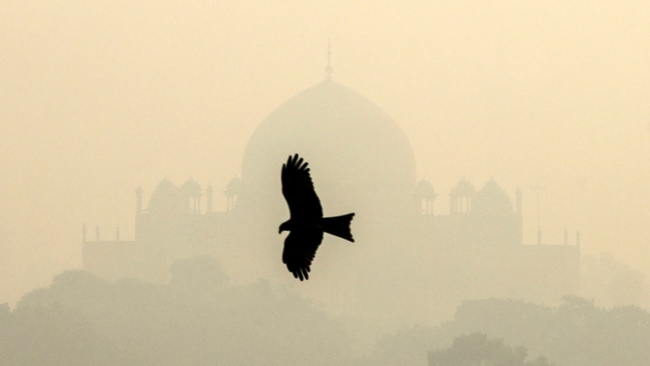 A bird is pictured as Humayun's Tomb is barely visible due to smog in the capital on October 29. (Image: Reuters)