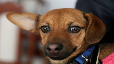 Britain bans puppy and kitten sales by pet shops
