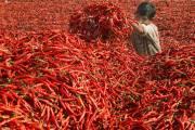 CHILLI Price/Rate Live: CHILLI Rate/Price in India, CHILLI , Latest