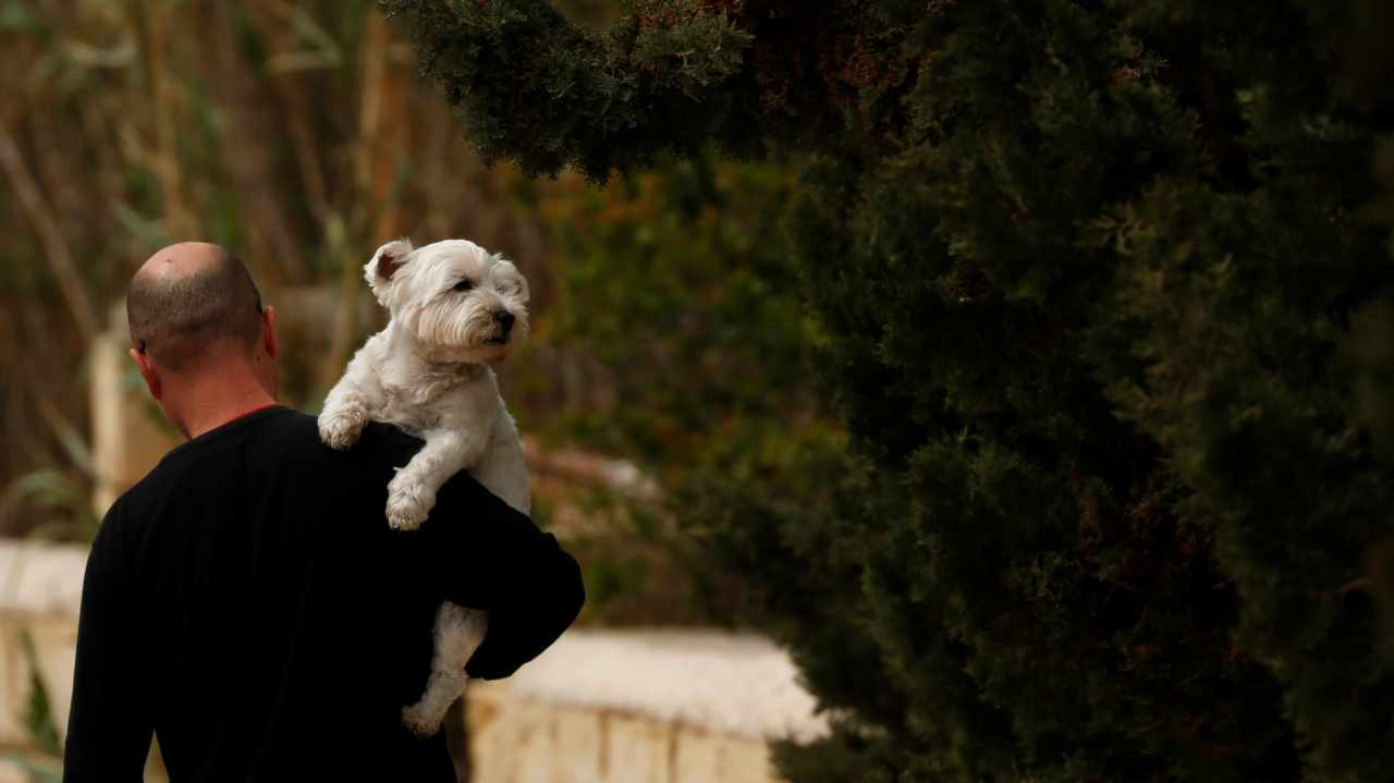 Dog tax in Switzerland   If you wish to get a furry little friend in Switzerland, the government will levy a tax, which has to be paid annually and varies in every municipality. (Image: Reuters)