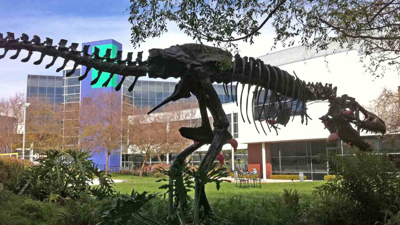 Did you know that Google owns a dinosaur? And it is named Stan. The skeleton of a Tyrannosaurus Rex was dug up near their office building and the company bought it and put it on display. (Image: Wikimedia Commons)
