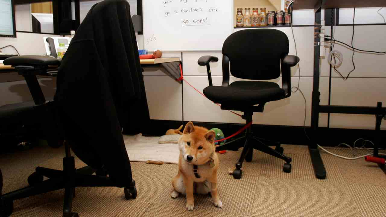 Google loves animals, especially pet dogs and goats. It is in the company's code of conduct! The company allows employees to bring their pet dogs or even goats and lets them roam around the corridors freely. (Image: Reuters)