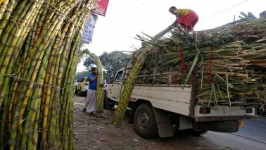 India's sugar output rises nearly 6% between October 1 and March 15: Trade body