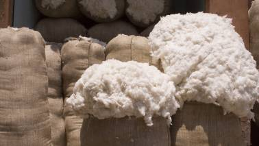 Why cotton can be one of the good investment options