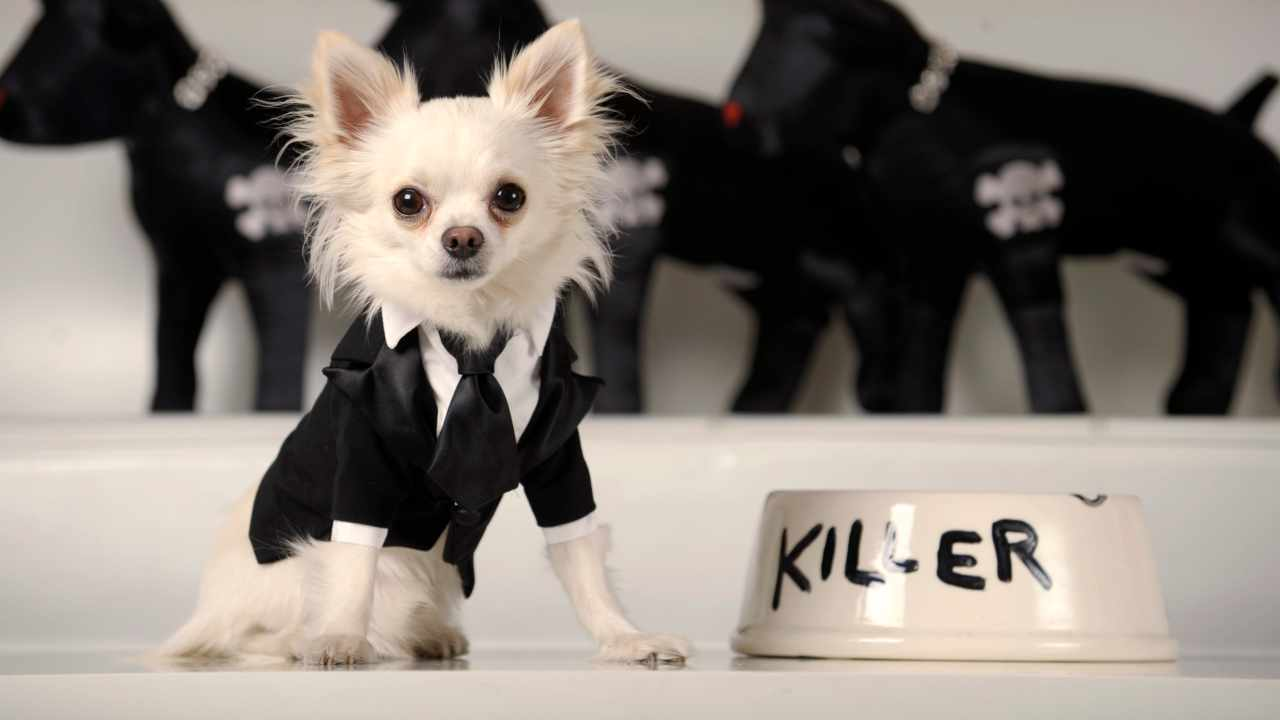 2. A black and white tuxedo for a small dog | Because of its forgetful owner, a poor dog somewhere will now have to dress in casuals! (Image: Reuters)