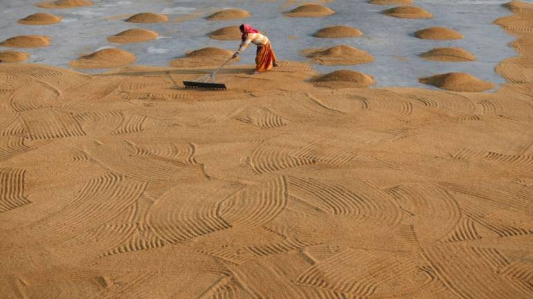 India's April-Feb rice, buffalo meat exports drop: government body