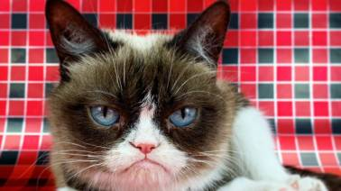 Social media sensation Grumpy Cat dies aged 7