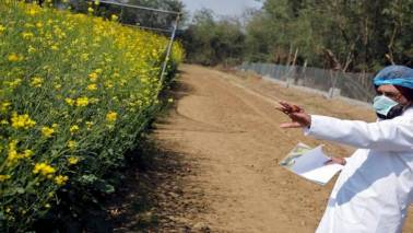 Defying ban, farmers' 'pro-GM seed' movement spreads to 11 districts in Maharashtra