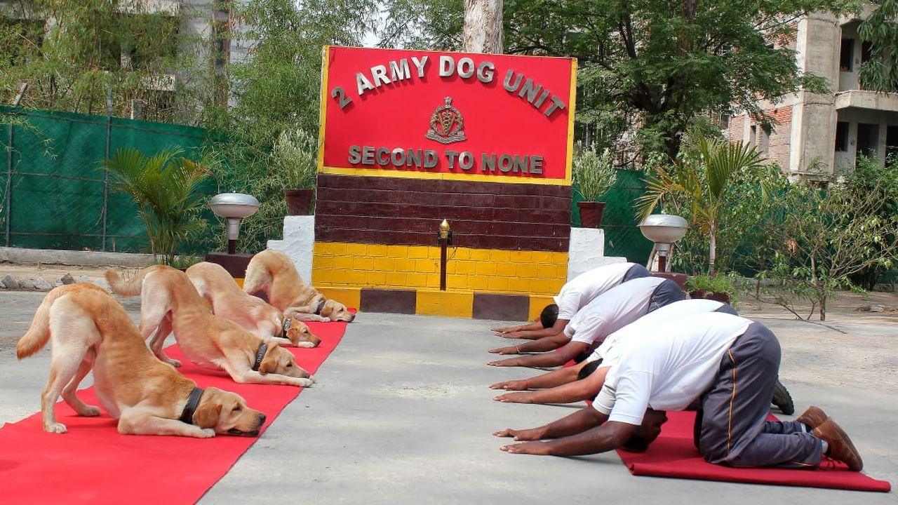 The Army Dog Unit practises Yoga during the fifth International Day of Yoga. (Image: Twitter/@SpokespersonMoD)