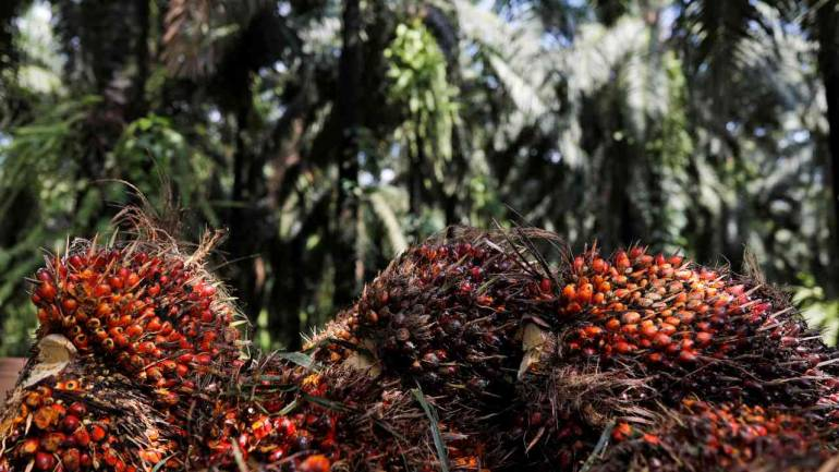 Image result for Palm Oil