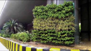 Man steals plant pots from Delhi's vertical garden, miffs netizens